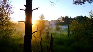 Sonnenaufgang Mit Viel Dunst