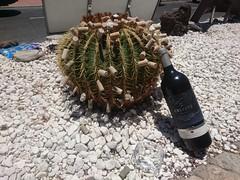 Safety first! (skumroffe) Tags: puertorico grancanaria islascanarias canaryislands kanarieöarna cork kork wine vin winebottle vinflaska beach strand playa playadepuertorico puertoricobeach spain spanien españa