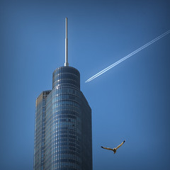 In flight (jbarc in BC) Tags: chicago skyscraper jet airstream bird seagull tower building sky aerial