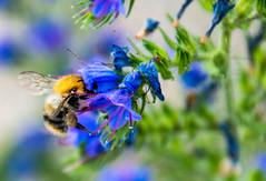 La tete au fond !!! (gnarel) Tags: insect proxi photo fleur nature
