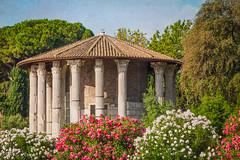Cartoline da Roma, postcards from Rome: tempio di Ercole vincitore (adrianaaprati) Tags: postcards temple antiquity mythology rome flowers oleander july summer trees roma