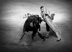 Octavio Chacón (aficion2012) Tags: ceret 2018 feria ceretdetoros corrida bull fight bullfight tauromaquia tauromachie toros toro taureaux taureau toreo octavio chacón fraile lidia torero toreador matador espada francia france derechazo derecha faena monochrome bw monotone