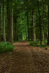 IMG_3869_Aurora (lieber_ulrich) Tags: herz park reha rehabilitation klinik wald natur lost place places