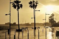 Golden Rainfall (Rojs Rozentāls) Tags: paphos cyprus κύπροσ rain sunset