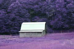A Conversation With the Forest (oldoinyo) Tags: barn trees pasture northcarolina landscape rural building fence