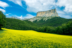The yellow rock (skweeky ツ) Tags: vercors mountains montagne massif parc naturel regional mount mont auguille yellow jaune colza