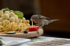 naughty bird (husiphoto) Tags: bird frech naughty sperling sparrow rom rome roma pasta city stadt d750 nikon nikkor spatz campo de fiori italien italy food essen italia