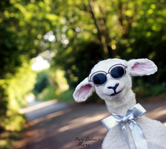 Lammy photobomb (pure_embers) Tags: pure embers laura pureembers uk england whimsical cute photography portrait lamb sheep taxidermy sculpture mary doll collector anthropomorphic sunglasses shades sunny lammy photobomb
