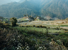 Bhutan: The Terraces of Haa. (icarium.imagery) Tags: canoneos5dsr bhutan blossom canonef1635mmf4l captureone green drukyul farmhouse forest haavalley hills himalayas landscape layers moody mountains nature rural travel tree valley village terrace farming