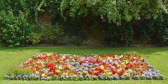 Summer Bedding (cdb41) Tags: sunbury walled garden bedding spelthorne