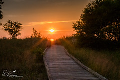 My Help Comes From You (amndcook) Tags: grass shoreline landscape sunset amandacook water upperpeninsula michigan outside boardwalk naturephotograph brimley outdoors rocks spiritledphotography lakesuperior nature