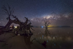 Gnarly Symmetry (Michael Waterhouse Photography) Tags: