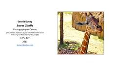 "Sweet Giraffe • <a style=""font-size:0.8em;"" href=""https://www.flickr.com/photos/124378531@N04/43463941172/"" target=""_blank"">View on Flickr</a>"