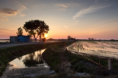 In the rice fields (magomu) Tags: deltadelebro delta ebro ebre amanecer dawn sunrise agua water reflection reflejo