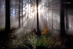 En busca de la luz (Jabi Artaraz) Tags: luz abetos amanecer niebla rayos rayosdeluz