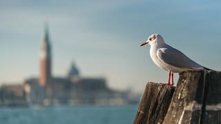 Venice Lookout