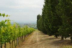 DSC00575 (stoev_ed) Tags: montepulcano toscana italy монтепульчано тоскана италия montepulciano slt57 tuscany