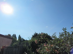 Tuesday, 17th, More sunshine IMG_3381 (tomylees) Tags: essex morning summer july 2018 17th tuesday weather sunshine blue sky