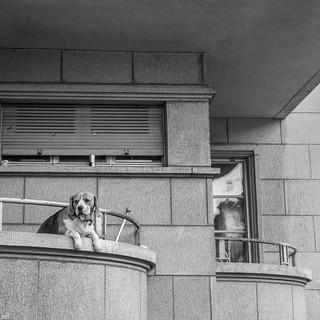 Chien sur un balcon