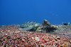 Turtle 7 (Petter Thorden) Tags: diving indonesia gili trawangan underwater turtle