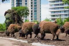 Rebirth of the herd (beyondhue) Tags: bison buffalo horticulture plant sculpture beyondhue gatineau jacques cartier park parc quebec ottawa canada mosaicanada display mother earth landscape progress