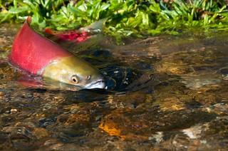 New approach to salmon farm tenures