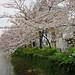 Shirakawa-Minami Dori - Kyoto
