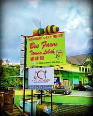 Brinchang, 39000 Brinchang, Pahang https://goo.gl/maps/Z6eNHs4VKJF2  #bee #蜜蜂 #نحلة #蜂 #꿀벌 #lebah #пчела #金马仑 #CameronHighland #travel #holiday #traveling #trip #Asian #Malaysia #旅行 #度假 #亞洲 #馬來西亞 #วันหยุด #การเดินทาง #ホリデー #휴일 #여행 #праздник #путешествие # (soonlung81) Tags: trip cameronhighland نحلة วันหยุด путешествие bee malaysia ผึ้ง 꿀벌 휴일 馬來西亞 旅行 馬來西亞旅行 蜜蜂 蜂 여행 asian пчела 度假 traveling 金马仑 ホリデー การเดินทาง праздник holiday lebah travelmalaysia 亞洲 travel