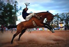 Rafa Cardoso e Mistério da Furacão (Eduardo Amorim) Tags: gaúcho gaúchos gaucho gauchos cavalos caballos horses chevaux cavalli pferde caballo horse cheval cavallo pferd pampa campanha fronteira quaraí riograndedosul brésil brasil sudamérica südamerika suramérica américadosul southamerica amériquedusud americameridionale américadelsur americadelsud cavalo 馬 حصان 马 лошадь ঘোড়া 말 סוס ม้า häst hest hevonen άλογο brazil eduardoamorim gineteada jineteada