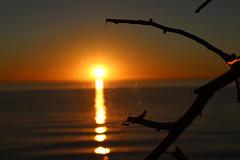web of life (~Jim Peacock~) Tags: sunset nature lakesuperior summer wisconsin