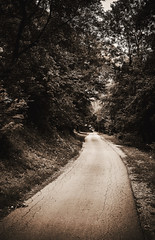 Old Forest Road (dejankrsmanovic) Tags: road street asphalt nature outdoor way concept conceptual natural day blackandwhite dark ambiance environment place forest wood ground land country countryside rural surroundings environmental landscape season leaf tree vintage retro abstract old