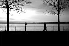 000536 (la_imagen) Tags: bodensee laimagen lakeconstanze lagodiconstanza lagodeconstanza silhouette silhuette siluet bregenz vorarlberg austria sw bw blackandwhite siyahbeyaz monochrome street streetandsituation sokak streetlife streetphotography strasenfotografieistkeinverbrechen menschen people insan