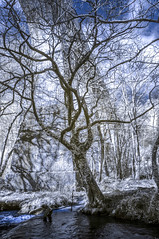 Tree (James Etchells) Tags: infrared ir photography ancient landscapes landscape luxulyan valley cornwall kernow south west uk england britain heritage history past clay industry industrial nikon portrait tree river stream nature natural world outdoors outdoor exploring exploration sky clouds