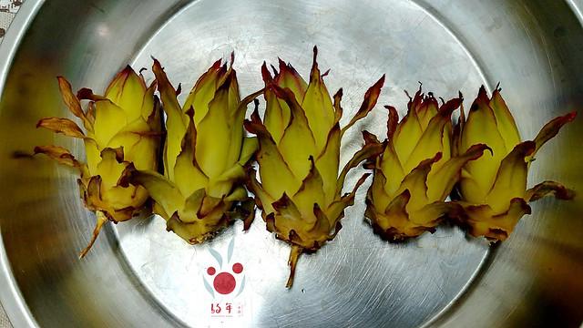 火龍果花苞怎麼煮?妳可以這樣試試(9)