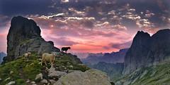 merinos (art & mountains) Tags: alpi alps masino valdimello pizzideltorrone piccoluigiamedeo sentieroroma traversata trekking hiking granito roccia ee eea cielo respiro spazio pecore sunset natura silenzio contemplazione profili cime creste vision dream spirit hpffilter