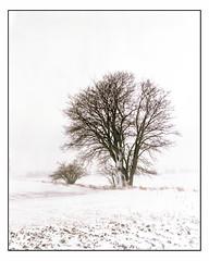 March 28th - 4x5 (magnus.joensson) Tags: sweden skåne söderslätt winter snow march large format 4x5 intrepid camera voigtlander heliar 21cm f45 kodak porta 160nc exp laboratoriet epson v800 scan