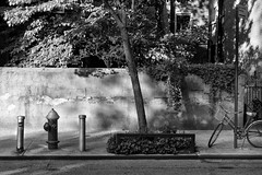 Visions of Old New York (Kenneth Laurence Neal) Tags: newyorkcity urban blackandwhite monochrome street trees bicycles shadows nikon nikond5200 cities cityscape