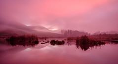 Red mist (lizcaldwell72) Tags: trees hawkesbay sunrise mist sky pekapekawetlands water newzealand light