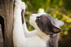 scratching [Day 3477]
