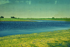 A Flooded Farm Field West of Town. (Dave Linscheid) Tags: farm rural agriculture country field flood texture textured butterfield watonwancounty mn minnesota usa
