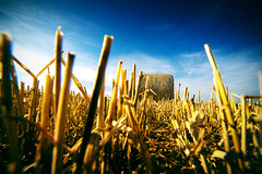 Moisson (Olivier Rapin) Tags: 20180715 broye campagne sonyalpha7 suisse samyang14mm moisson straw rolls rouleaux paille