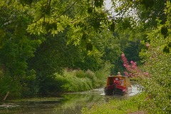 Compton Canal (keyrex) Tags: canal water bright tranquil nature boat barge tree summer pink green