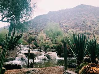 Scottsdale After a Fresh Rain