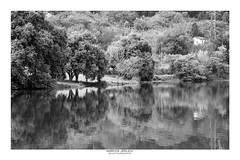 [ Winter coming ] (Marcos Jerlich) Tags: reflections trees woods landschaft landscape paysage winter forest natural house contrast flickr 7dwf bnw noiretblanc blackandwhite bw monochrome mono blancoynegro florestanacionaldeipanema brasil américadosul canon canont5i canon700d efs1855mm marcosjerlich