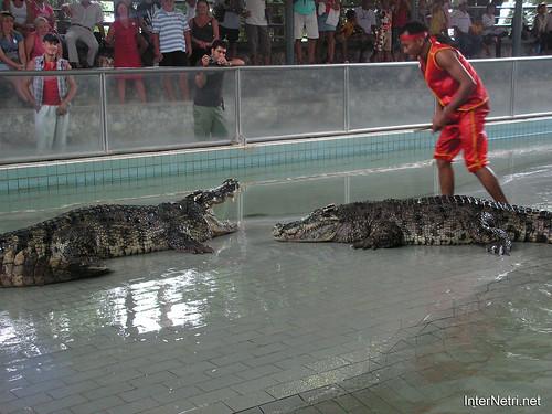 В пащу крокодилу Паттайя Таїланд Thailand InterNetri 34