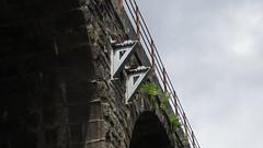 A400m Yarrow Viaduct (61379 Mayflower) Tags: railway railways electrification