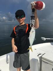 Skipjack (Tampa Fishing Charters, Inc.) Tags: bluefish