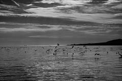 Birds (petia.balabanova(tnx for +3 million views)) Tags: light birds sea andalusia malaga spain travel blackandwhite bw nikond800 2470mm monochrome silhouette sky clouds life
