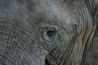 Another elephant close-up...