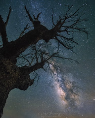 Start-and-end (rafaberlanga) Tags: tree nature night forest dark sky starspace landscape branch outdoors galaxy woodland milkyway winter spooky scenics astronomy horror nebula backgroundsl